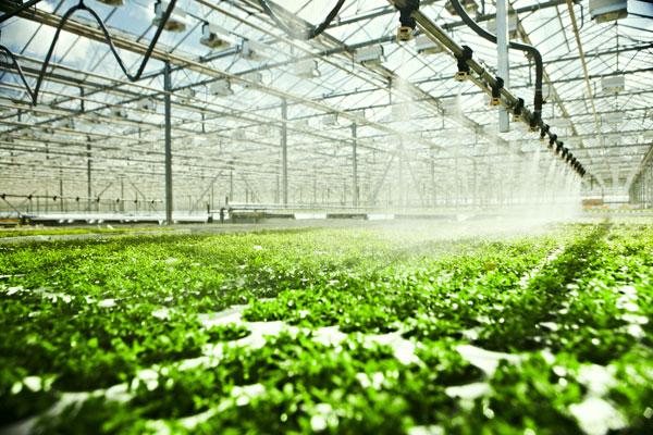 greenhouse irrigation